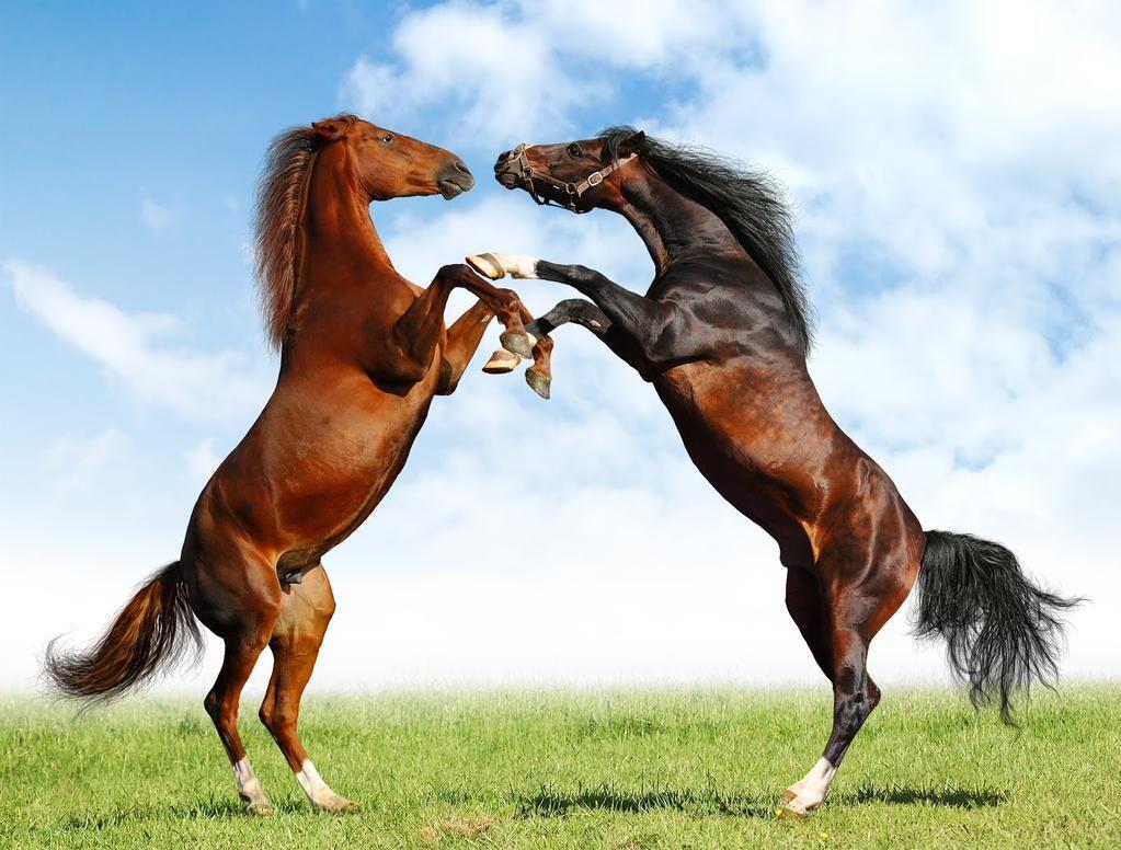 soñar con caballos bonitos
