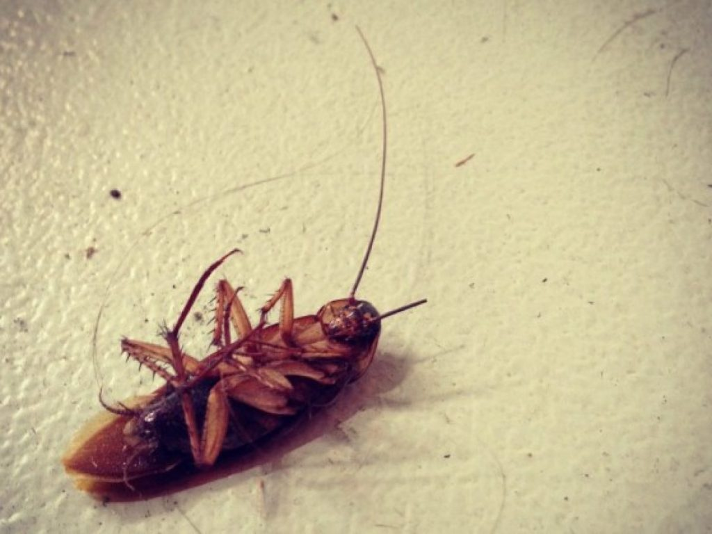 soñar con cucarachas vivas y muertas
