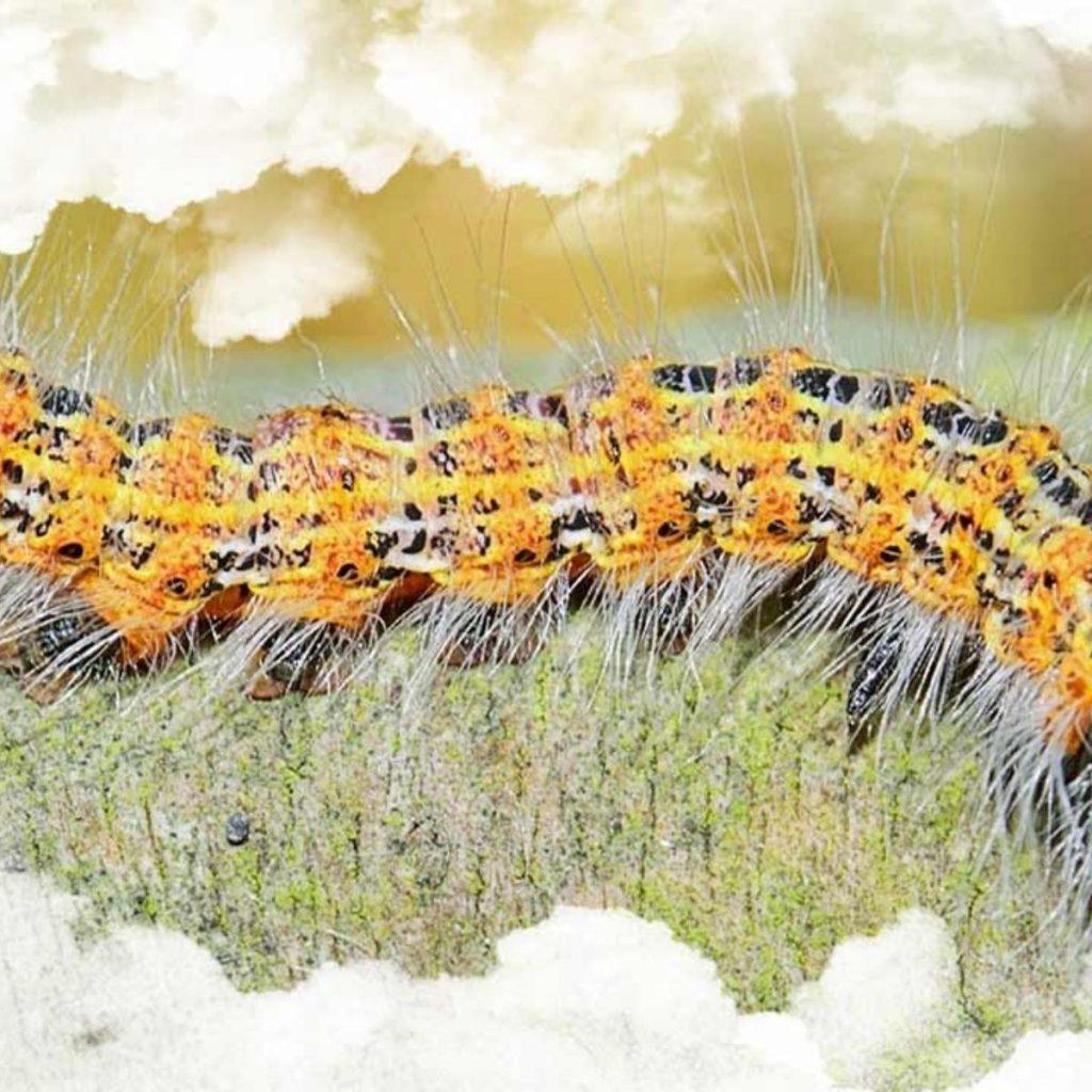 soñar con gusanos de colores llamativos