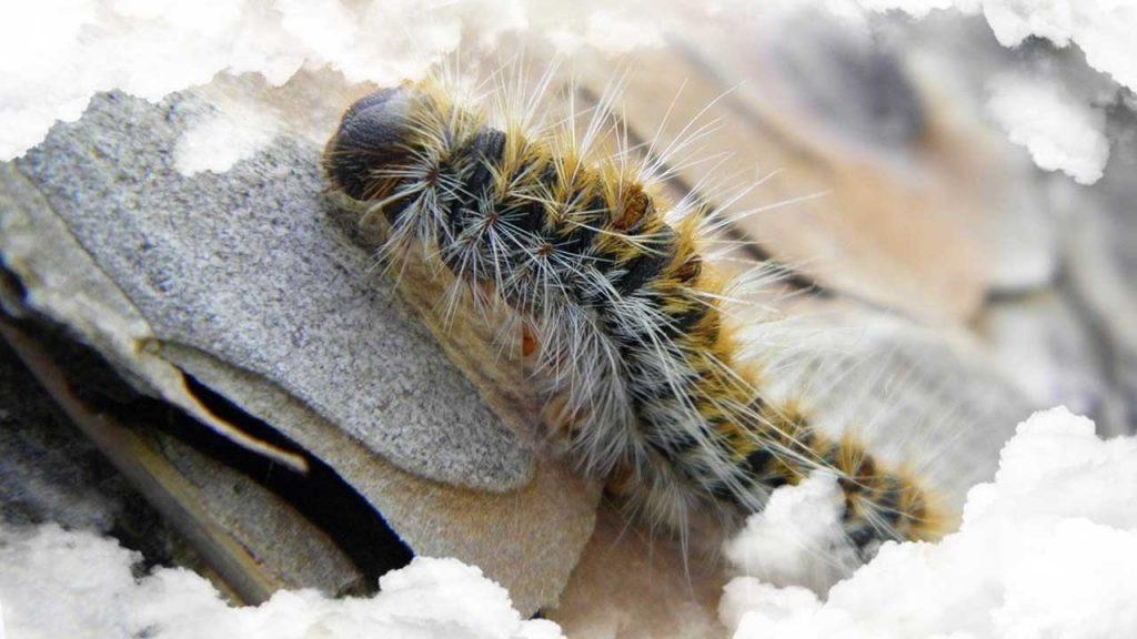 soñar con gusanos de seda