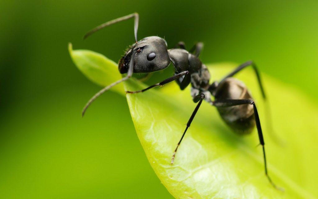 soñar con hormigas e insectos
