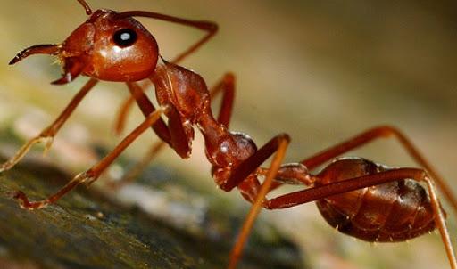 soñar con las hormigas