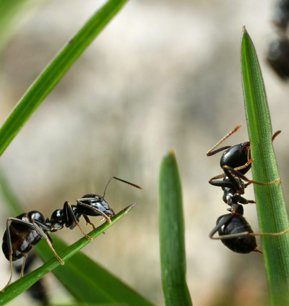 soñar con hormigas llevando comida