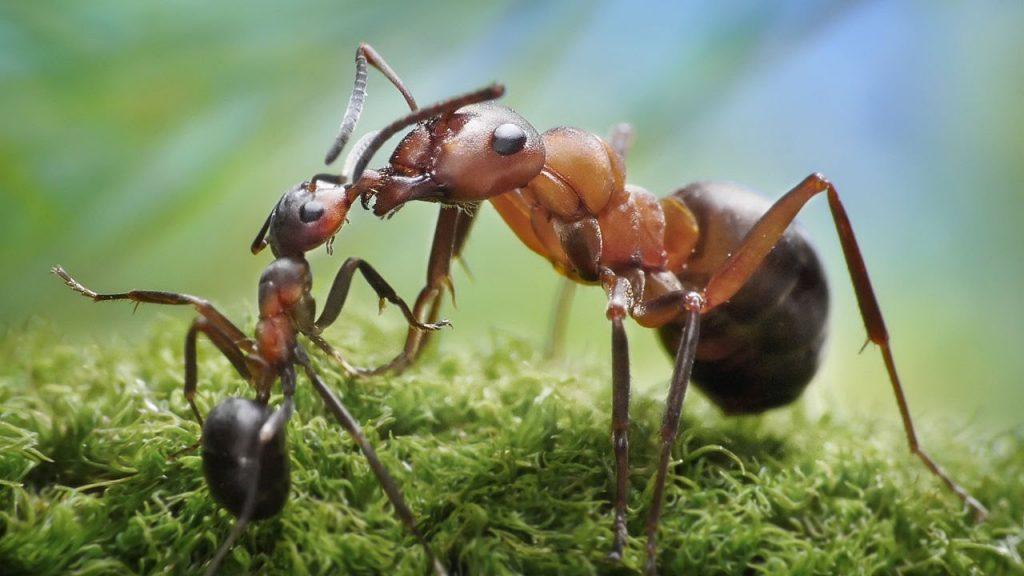 soñar con hormigas que numero juega