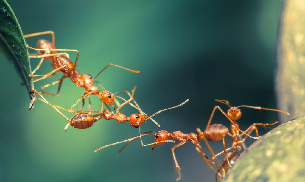 soñar con las hormigas trabajando