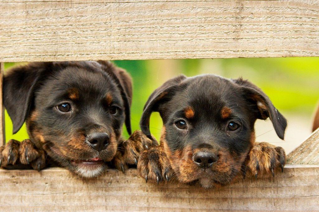 que es soñar con perros pequeños