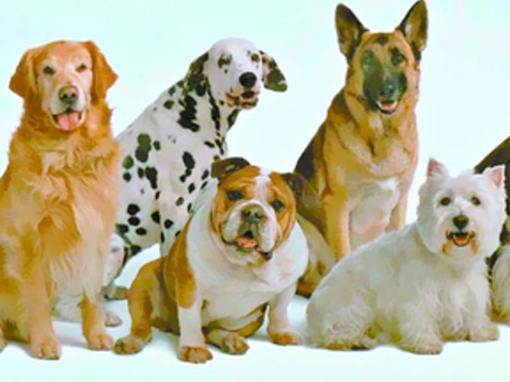 que es soñar con perros