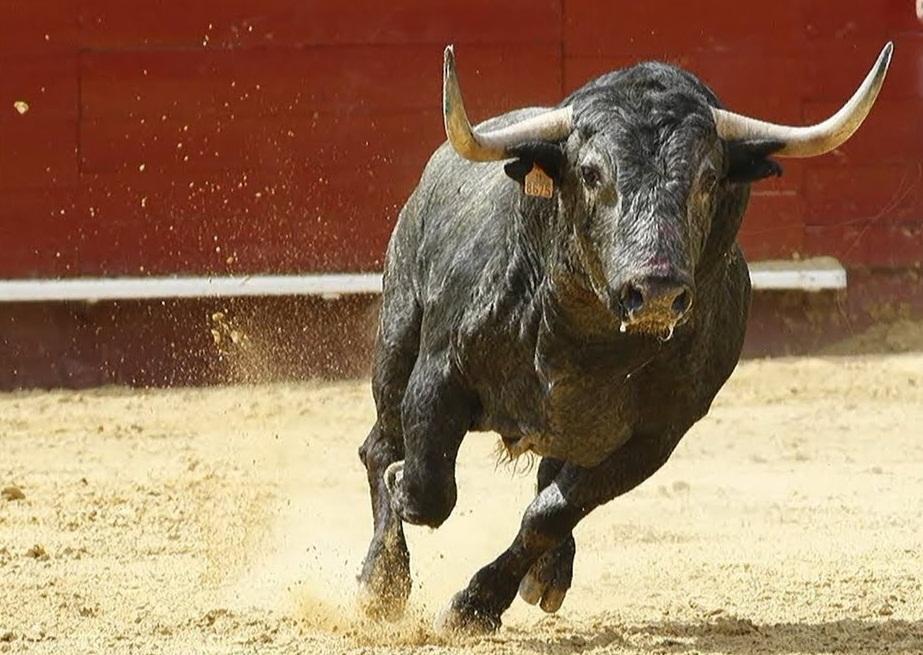 soñar con toros agresivos
