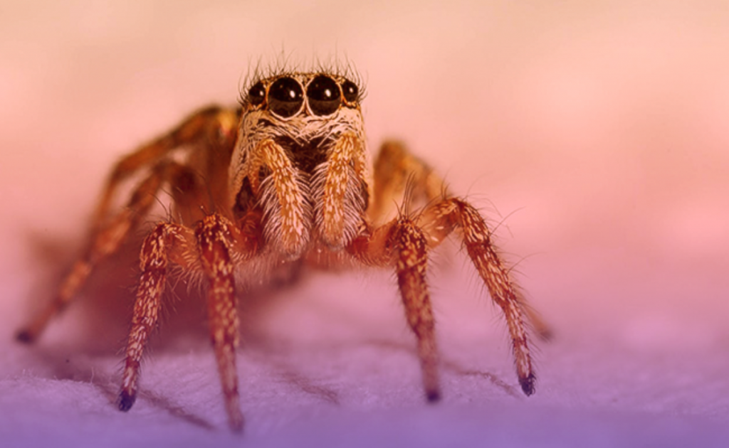 soñar con arañas monas