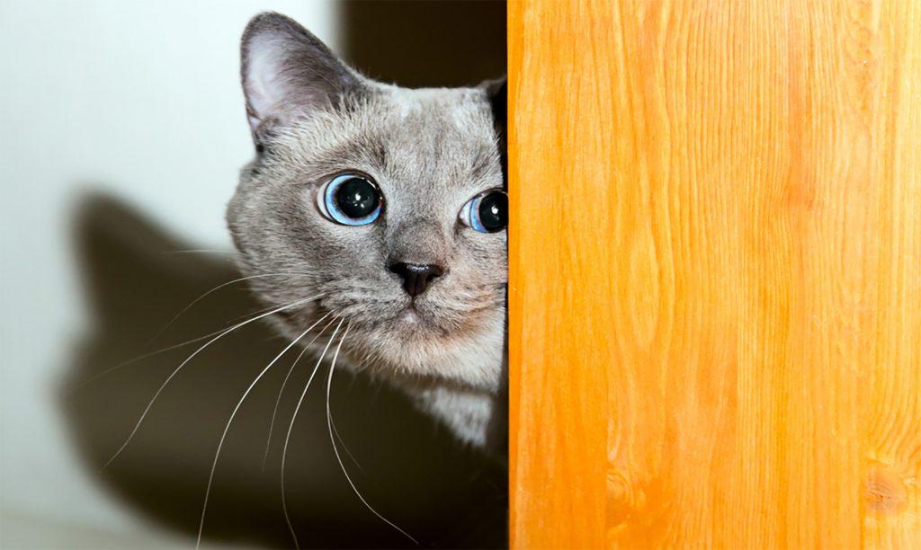 soñar con gatos dentro de la casa