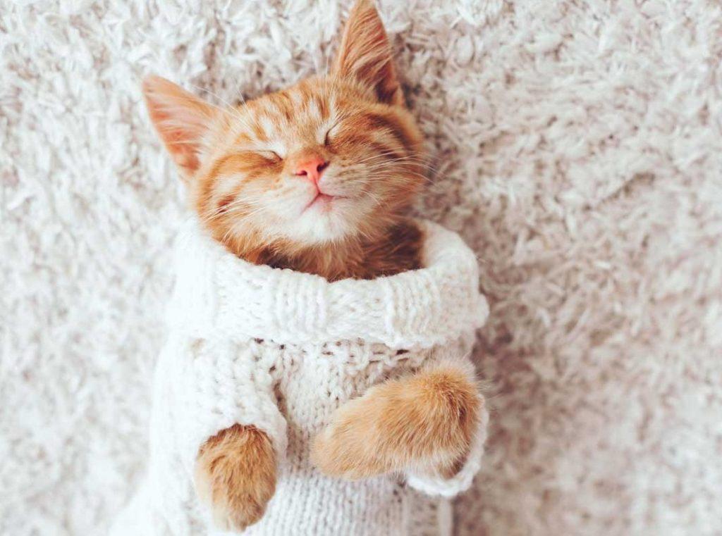 soñar con gatos chicos